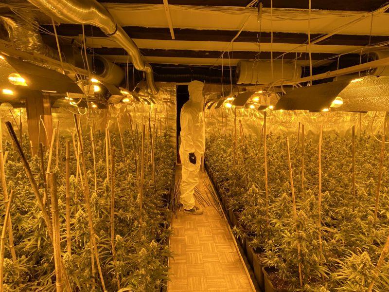 Indoor-Plantage mit Cannabispflanzen